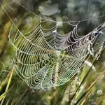Spider knot