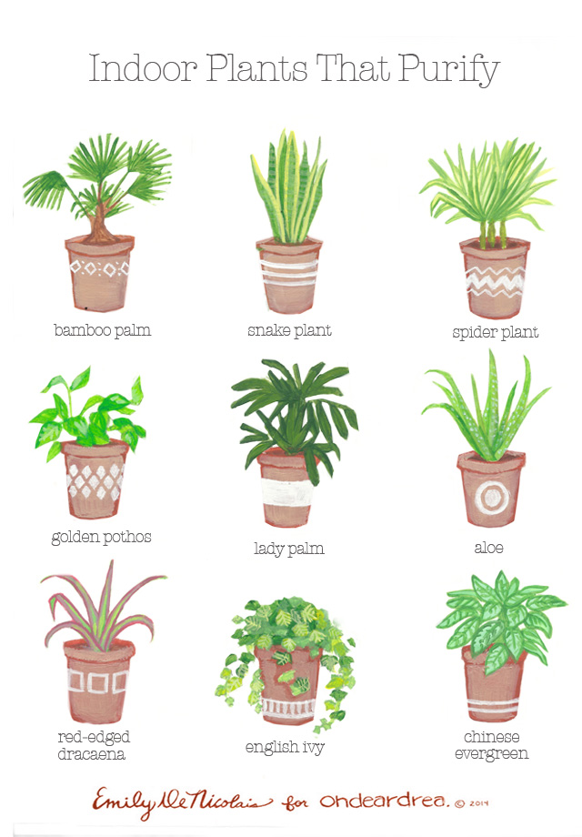 Simple natural living the best air purifying plants for for Low maintenance air purifying plants