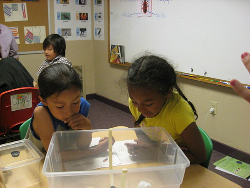 Future scientists conduct their first experiment: 1st grade students at the Salish School of Spokane hypothesize how different food choices and chemical scents will affect insect behavior and then record and discuss the actual results. Photo courtesy of ARS.
