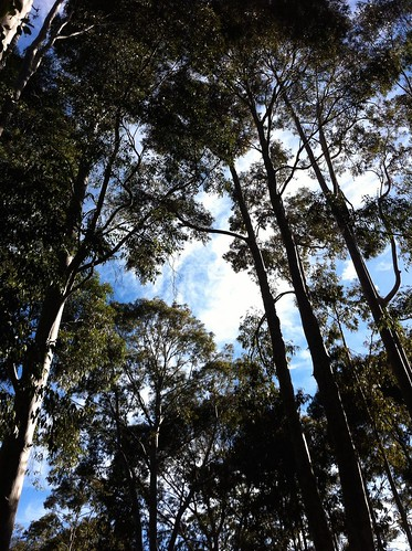 Hoffman's Mill: Creaking Tree