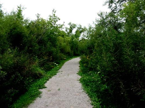 Hawthorn Pond Natural Area