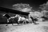 Horse Ranch. Homestaed, Fl.
