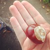 First conker