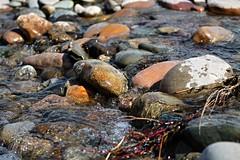 leaf(0.0), seafood(0.0), sea(0.0), food(0.0), autumn(0.0), wildlife(0.0), mussel(0.0), stream(1.0), water(1.0), nature(1.0), tide pool(1.0), body of water(1.0), pebble(1.0), rock(1.0), pond(1.0),