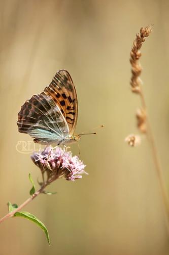 Butterflies' Paradise