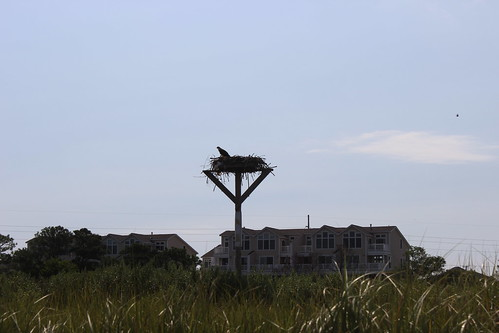 Bethany Beach - Coastal Kayak - Osprey Nest
