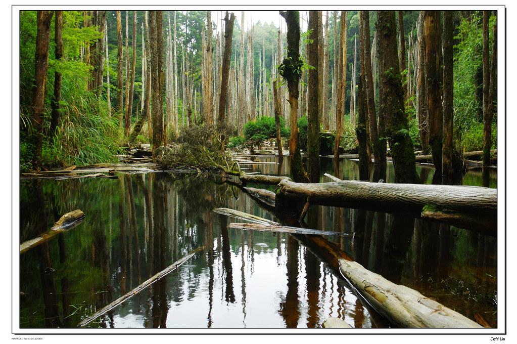 忘憂森林 初訪