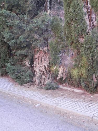 Vegetación olvidada en calle Almendros