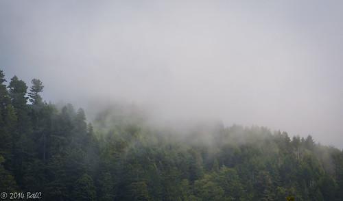 Fog Dancing through the Mountains