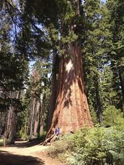 Big Tree, Small Pinecone
