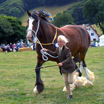 Shire horse.
