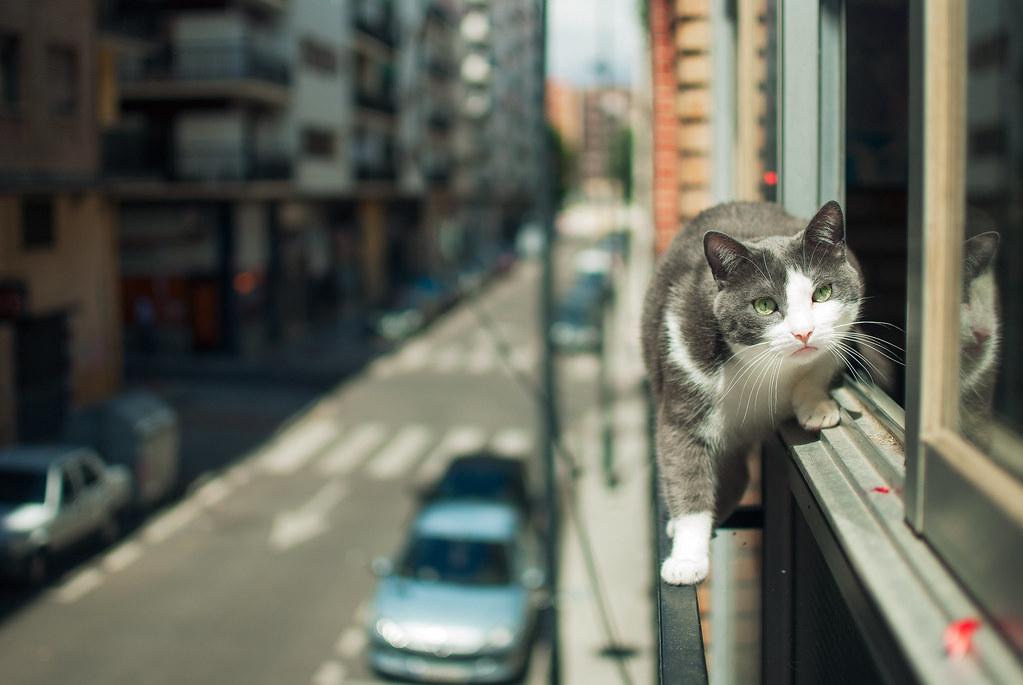 Tightrope walker cat
