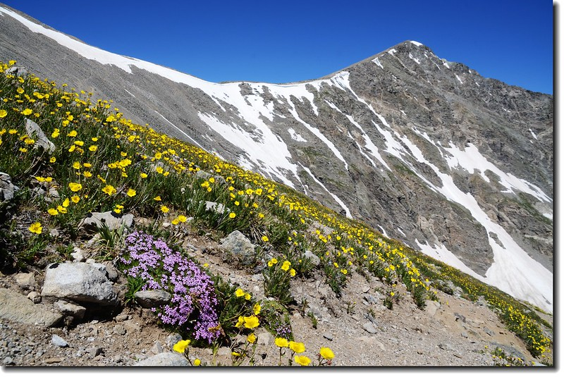 Torreys Peak from Grays' slope 3