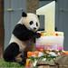 BaoBao pausing to pose by Sandra Parshall