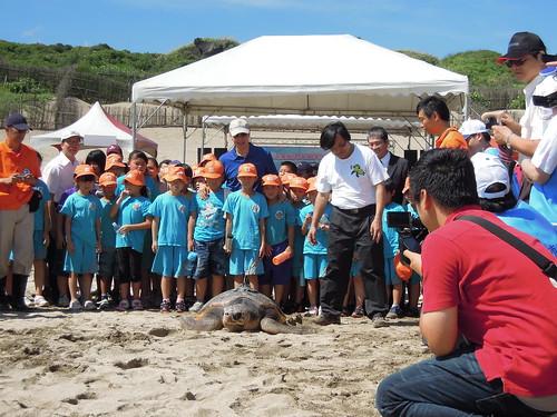 海龜生物學家們也紛紛對海龜進行各種的研究,希望能幫助當地政府制定良好及有效的保育政策