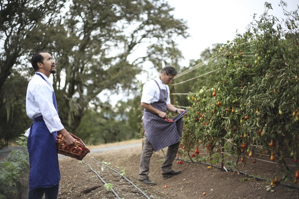 Garden Harvest with Executive Chef Todd Knoll
