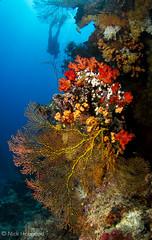 Aqua-Trek Dives - 16 Aug. 2014