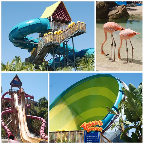 Sea World Aquatica collage