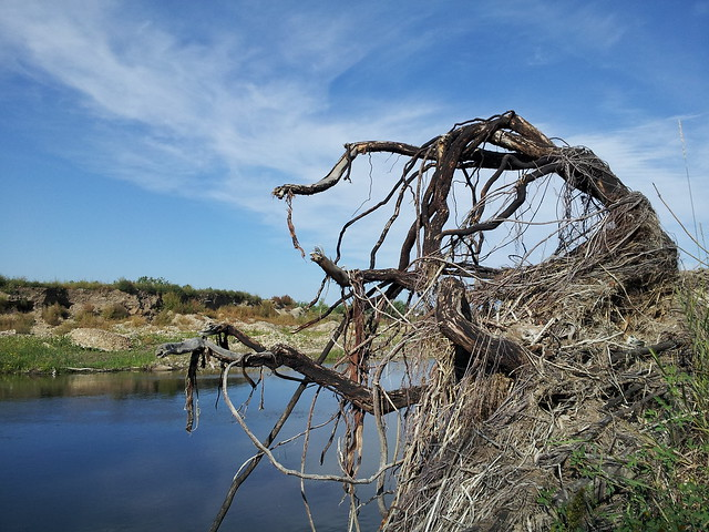 dead tree on a bank of a creek