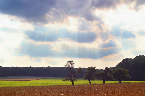 summer sky sun storm tree green field weather clouds canon landscape forrest pennsylvania farm meadow rays sunbeams softglow