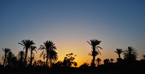 trees sunset landscape sundown cyprus palm larnaka