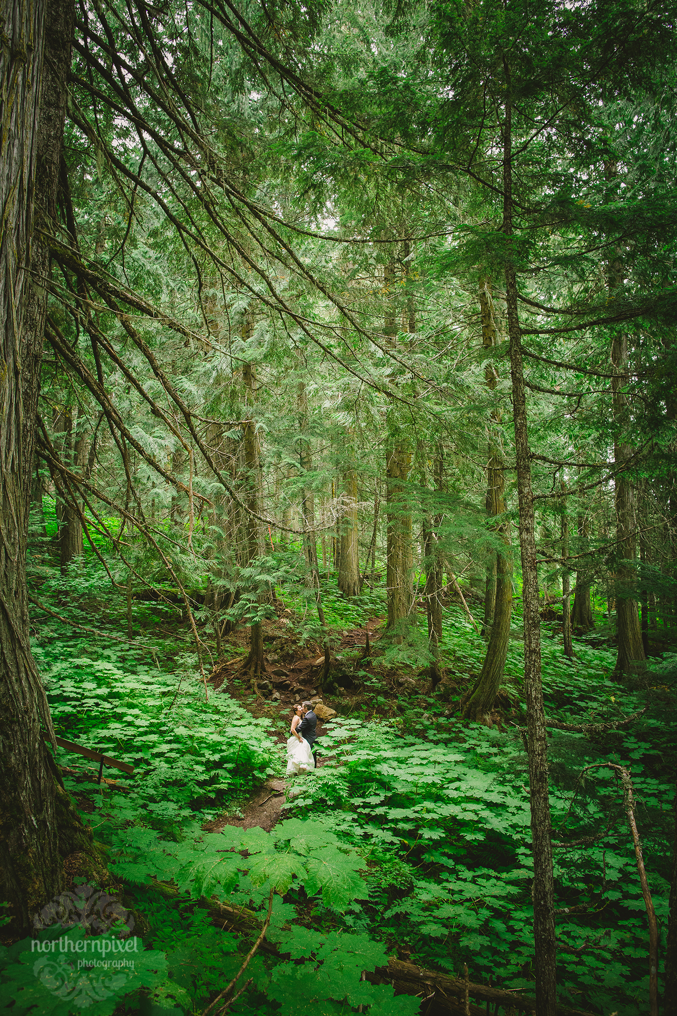 Ancient Forest Prince George BC