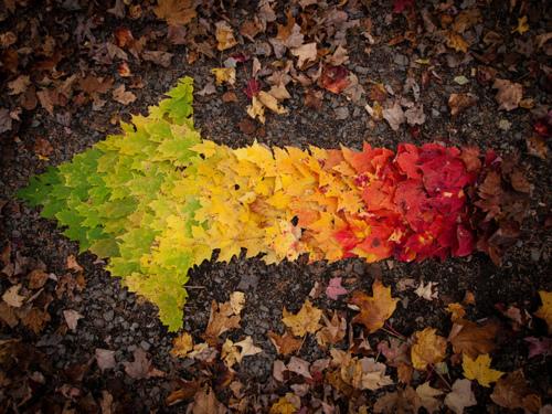 Autumn Spectrum 10/10/10