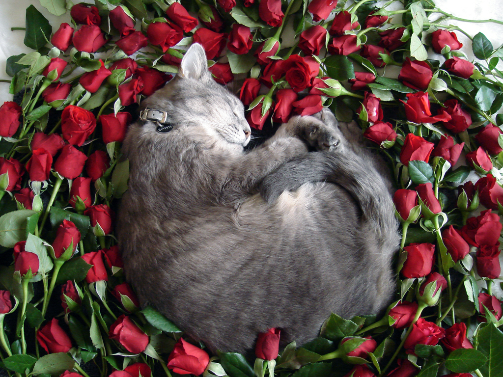 smoggy eternally resting on a bed of roses.