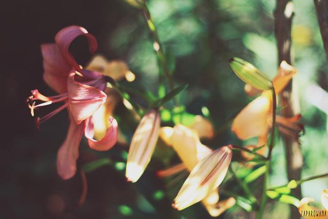 zaparowana.blogspot.com