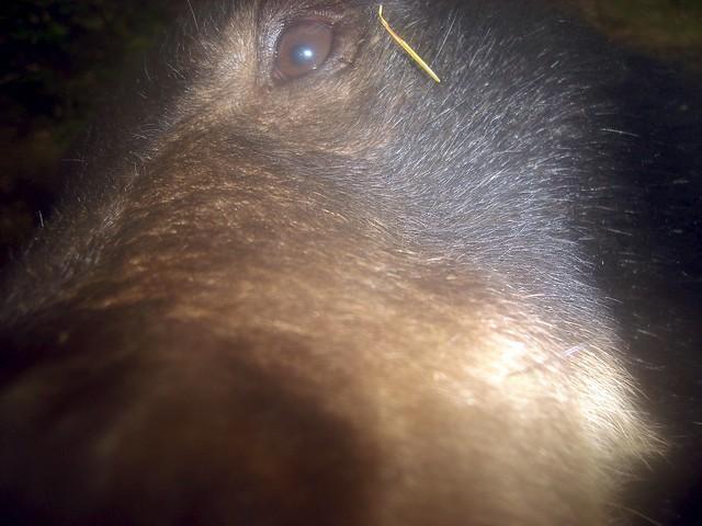 black bear mischief