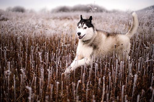 Kenai Winter 2016-3