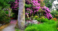 The month of May in Government house gardens