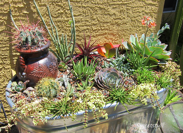 New Succulent Water Trough