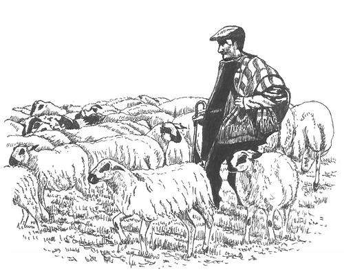 Pastor y rebaño de ovejas