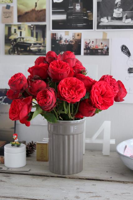 red roses rote Freilandrosen