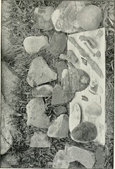 """Image from page 36 of """"With nature and a camera; being the adventures and observations of a field naturalist and an animal photographer"""" (1898)"""
