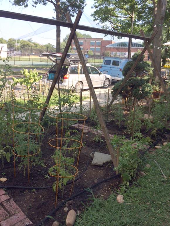 sue-garden3