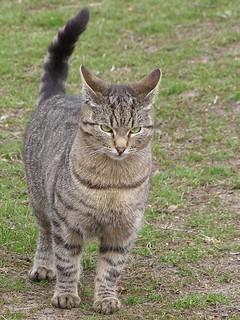 Rigorous Cat