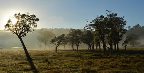 morning sunlight mist silhouette misty landscape morninglight shadows grove earlymorning australia bluesky nsw fields australianlandscape melaleuca myrtaceae ruralaustralia northernrivers rurallandscape paperbarks morninglandscape sunlitground keerrong teraniacreekvalley