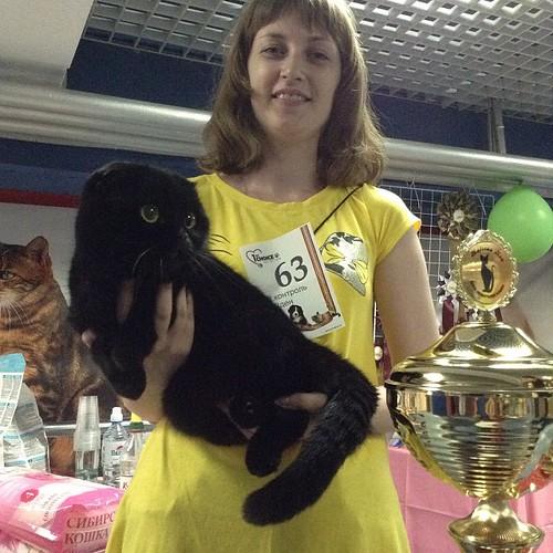 Беси оф Бест первого дня, очаровательный черный котик скоттиш-фолд!))) #краснодар  #выставкикошек