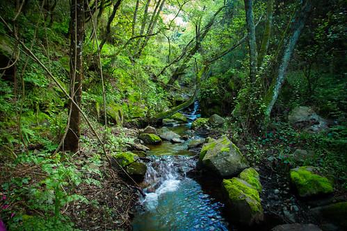 sardegna verde green sardinia vallermosa