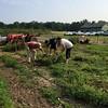 Food Bank Volunteering Richmond Va