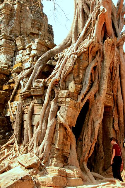 Siem Reap Cambodia Ta Som Temple