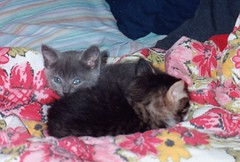 Baby Artemis and her brother
