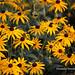 NOTL Flowers 14-07 by pamela_henwood