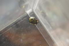 Mysterious Bug