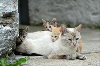 Cat 0435
