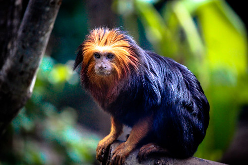 Monkey at Paris Zoo