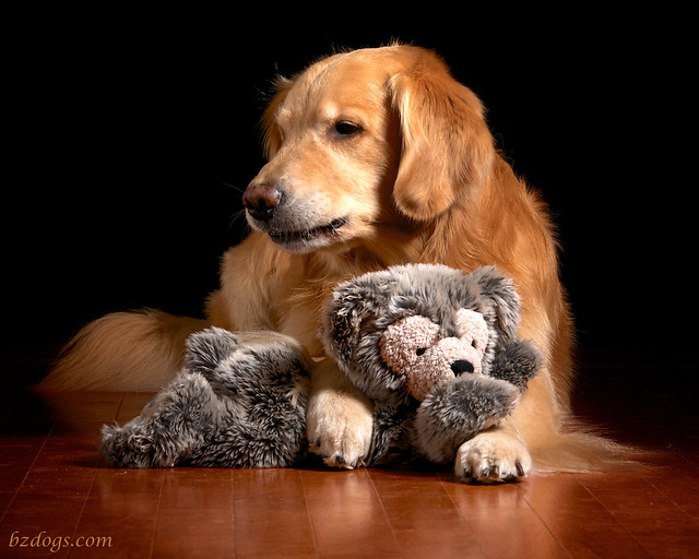 A Dog and his Teddy