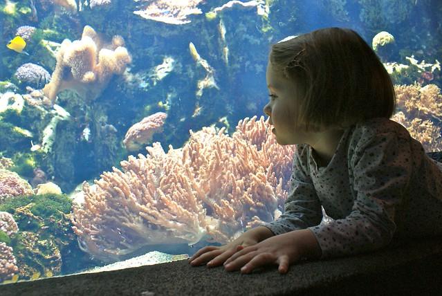 Fascination pour le peuple de la mer est entière chez les plus jeunes.